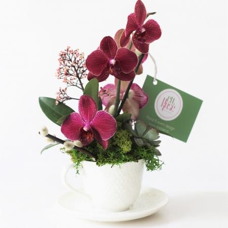 Aranjament floral cu orhidee Petite Sourire