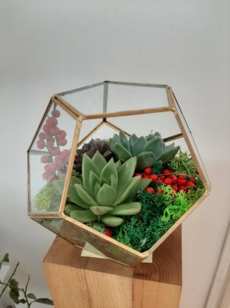 Terariu elegant cu ilex roșu și plante suculente