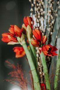 Decor de Craciun cu amaryllis