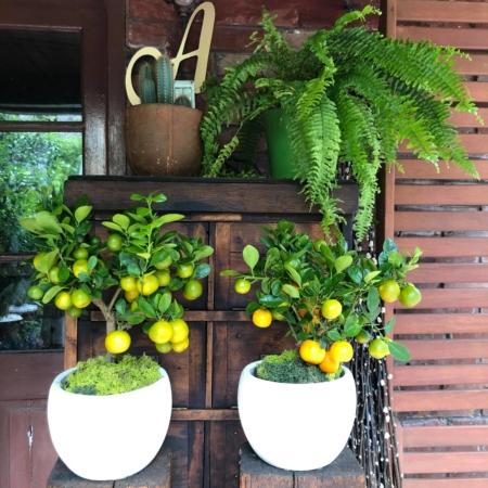 Citrus natural decorativ cu fructe