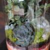 Terariu cu plante suculente Eden Garden