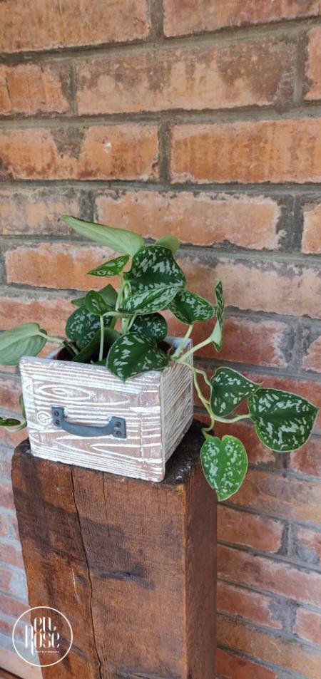 plante naturale ușor de întreținut