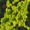 Tablou mare cu licheni stabilizați Amazon