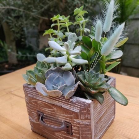 Mini habitat cu plante suculente Vivid Green