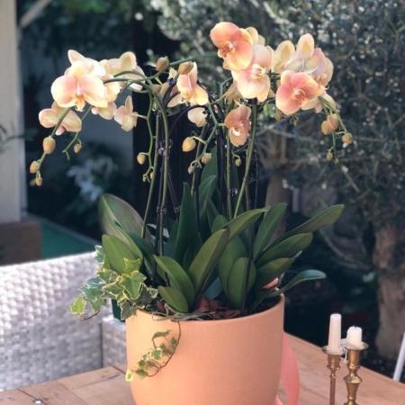 enRose Premium Aranjament cu orhidee naturală în vas ceramic