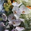 enRose premium Buchet deosebit cu flori prețioase
