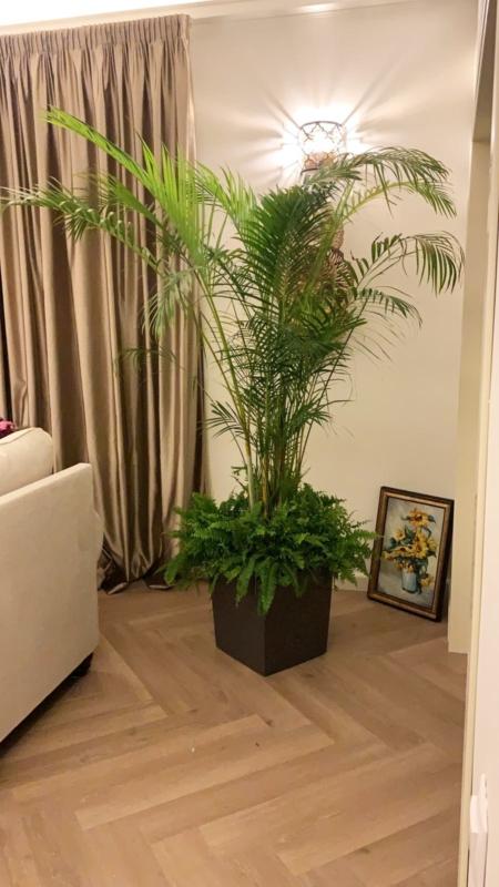 Aranjament de apartament cu Areca