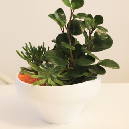 Mini grădină cu plante suculente