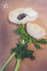 Anemonele - unele dintre cele mai iubite flori
