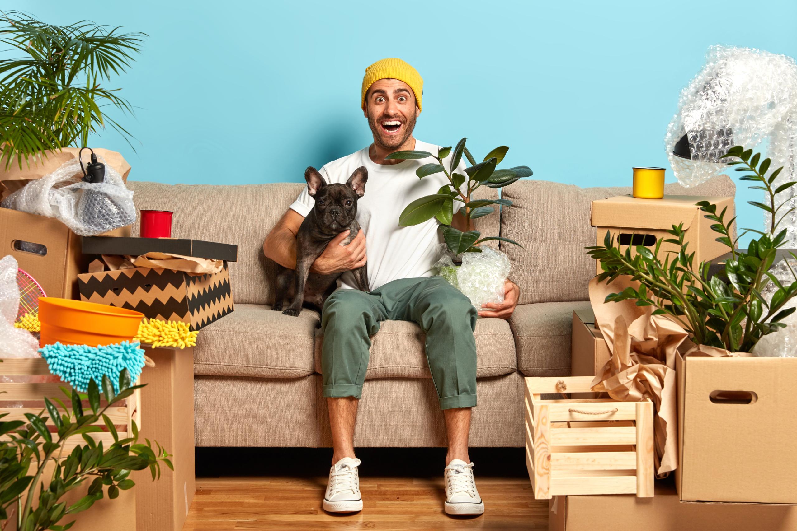 Plante pet friendly